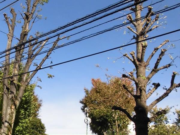 電線に絡んだ木の伐採